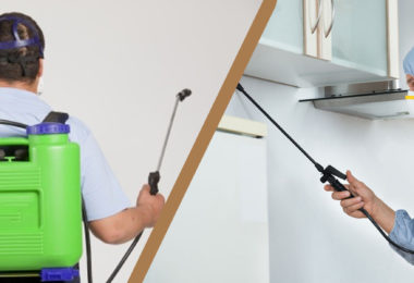 Find The Right Building And Pest Inspection Gold Coast