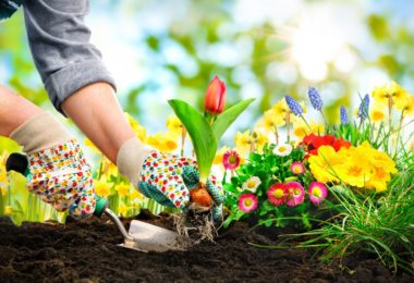 Here's Some Gardening Advice on Planting Sweet Potato This Spring