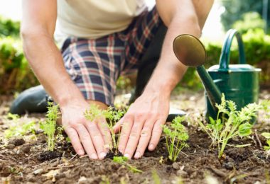 Lawn Core Aeration - Things You Need To Know