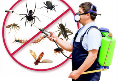 Take Ultimate Decision to Opt For The Best Building And Pest Inspection Gold Coast