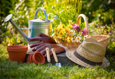 When Should You Trim Your Trees And Shrubs